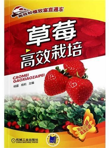 草莓高效栽培(高效种植致富直通车)