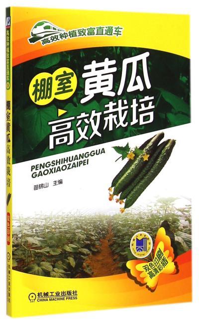 棚室黄瓜高效栽培