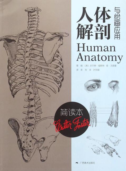 简读本:人体解剖与绘画应用