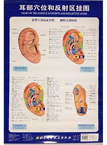 耳部穴位和反射区挂图(新增主治病证对照,赠精美刮痧板)