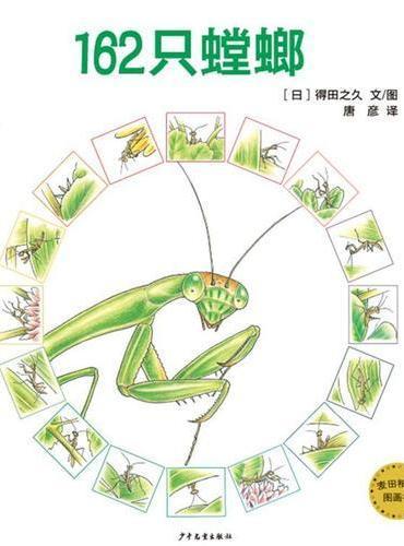 麦田精选图画书162只螳螂