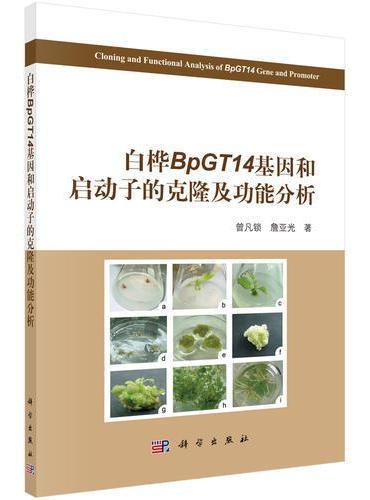 白桦BpGT14基因在细胞壁发育和抗逆境胁迫中的功能