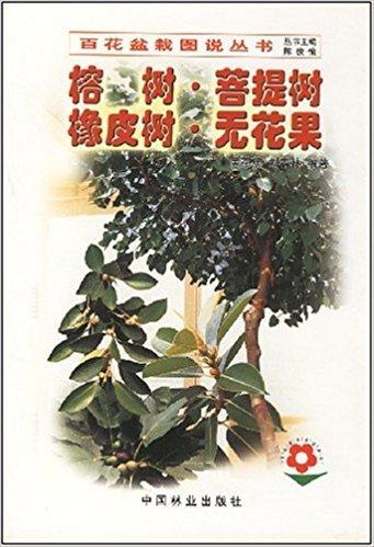 榕树菩提树橡皮树无花果