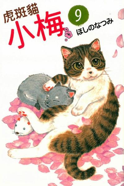虎斑貓小梅 9