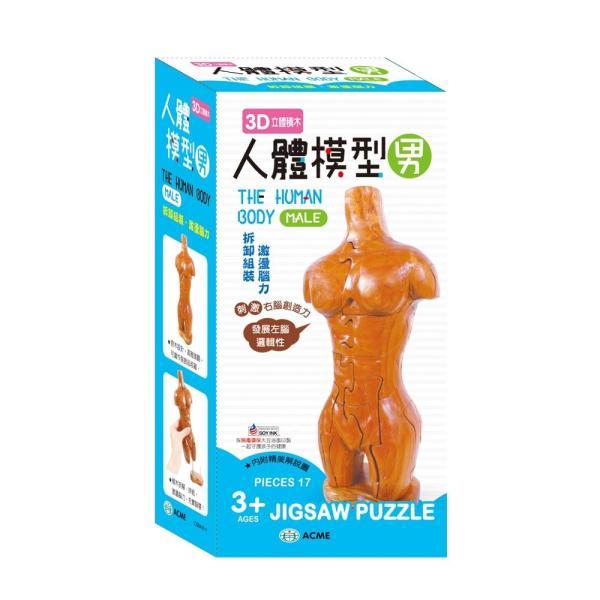 3D立體積木 人體模型(男)