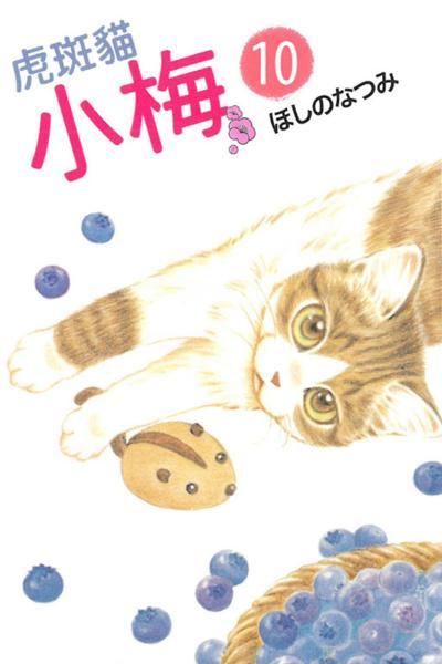 虎斑貓小梅 10