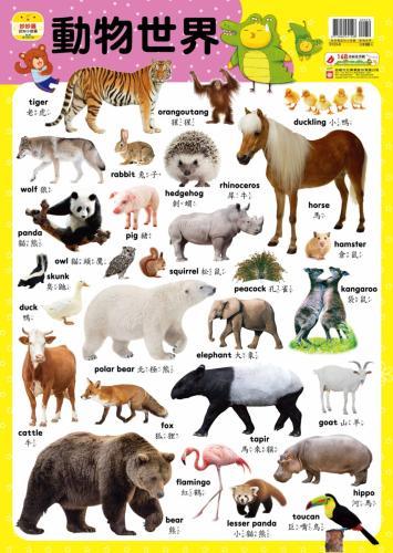 妙妙雞認知小掛圖:動物世界