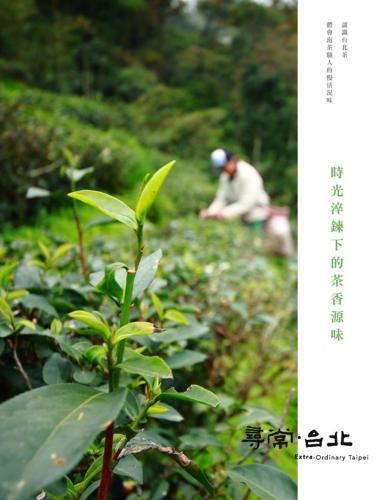 尋常.台北|品茗好茶:時光淬鍊下的茶香源味